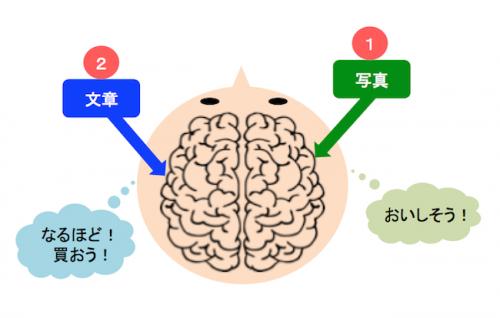 右脳にアタックするのが写真の役目、それをどんな行動に結びつけるか、判断材料になるのが文章の役目。