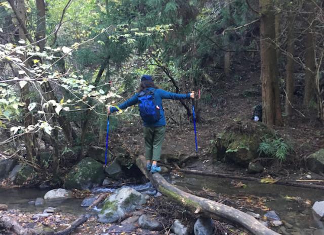 トレッキングポールを両手に林の中を登っていきます